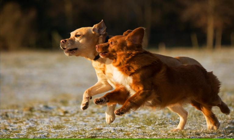Correr con tu perro: todo lo que debes saber